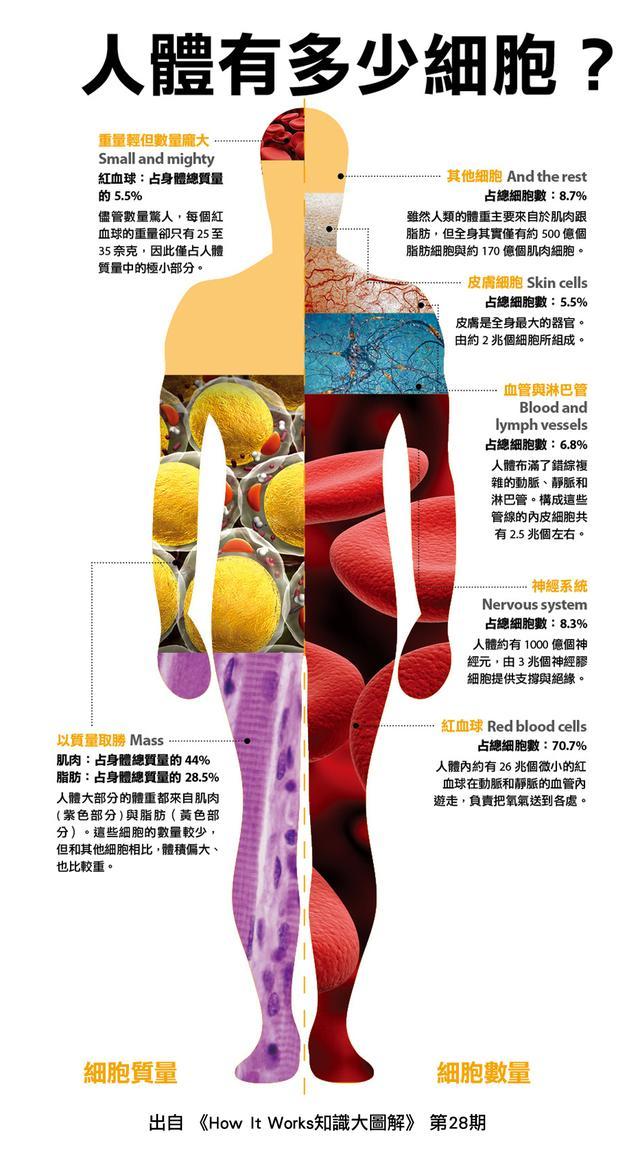 【科谱】细胞是所有生物体的基石 – 神奇的细胞世界