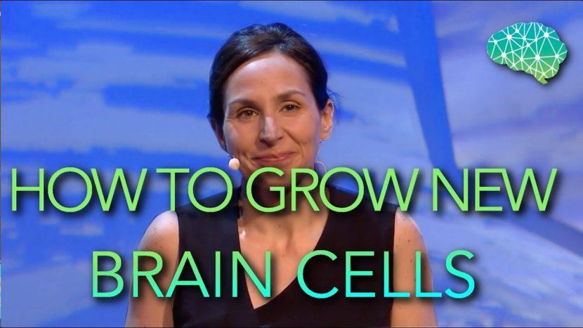 我们成人可否长出新的神经细胞?